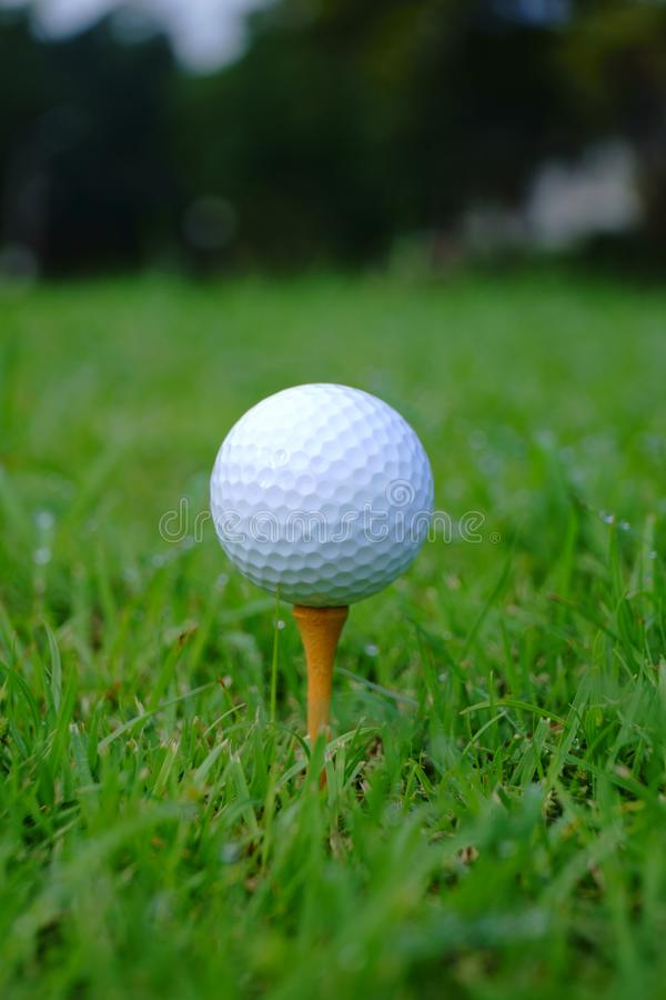 Golf ball and tee with gold course background ready to tee off royalty free stock photography