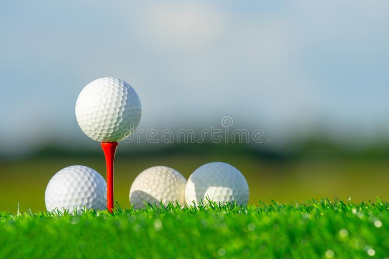 The golf ball on tee pegs ready to play and on green grass in the nature background stock photo