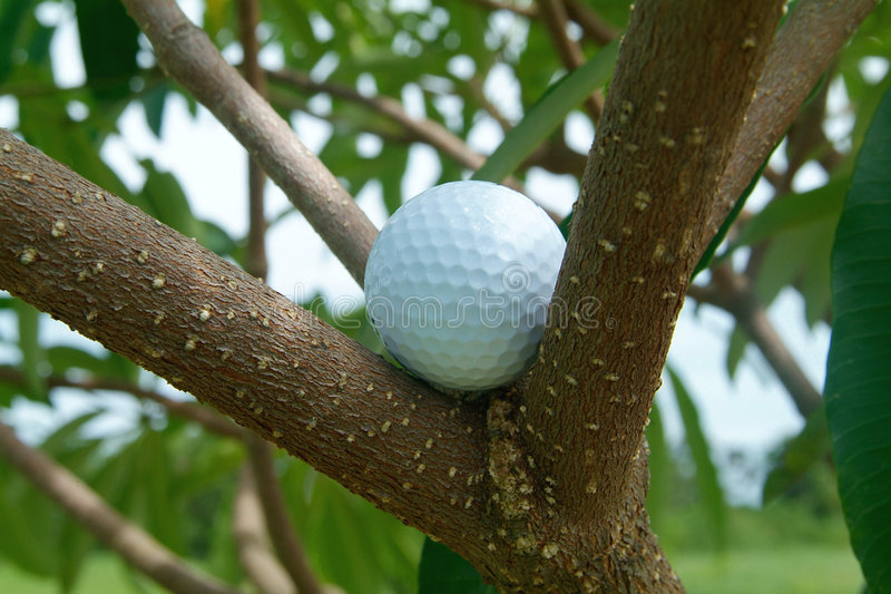 Golf ball in tre royalty free stock photos