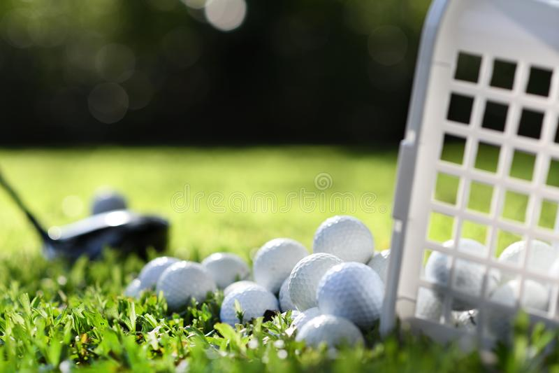 Golf balls in basket on green grass for practice royalty free stock photo