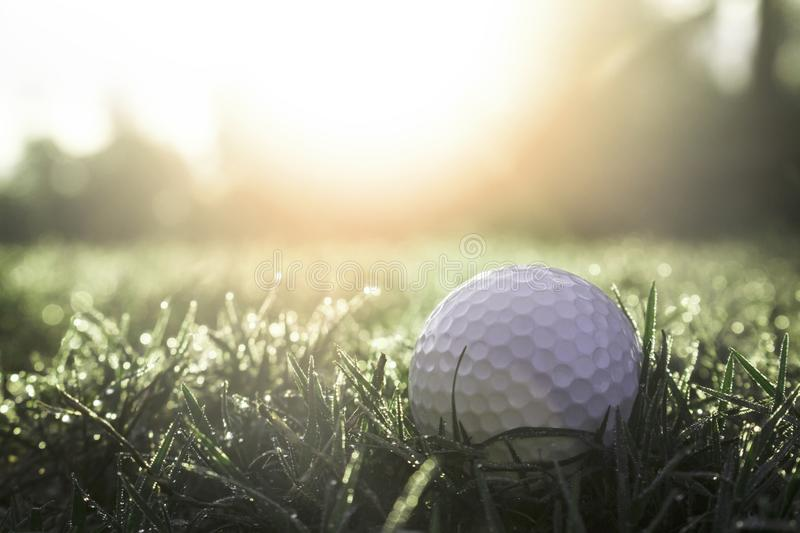 Golf balls on green lawns in beautiful golf courses with sun rise background stock photography