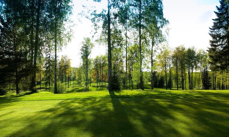 Golf bosplaats met zonneschijnlicht stock foto