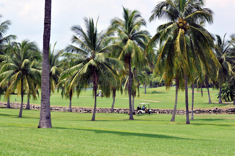 Download Golf Course stock image. Image of tourist, manzanillo - 15525135