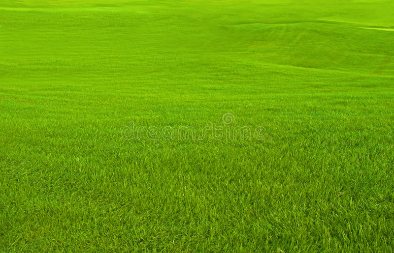 Download Golf Course stock photo. Image of outdoors, leisure, enjoy - 3539748