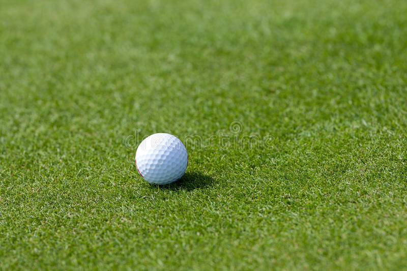Golf course with ball in green grass. White golf ball on fresh green royalty free stock photo