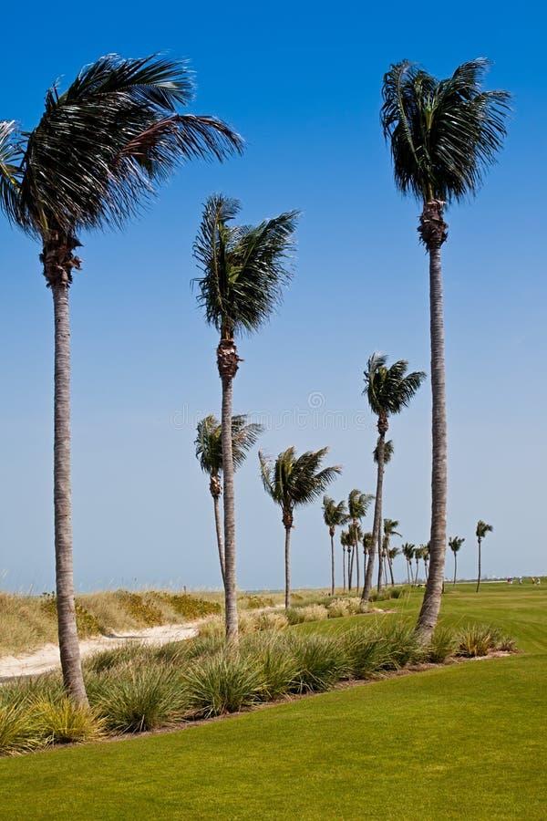 Golf Course in Florida