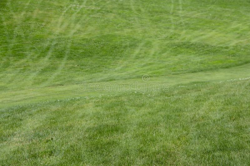 Golf Course green grass background. royalty free stock photo