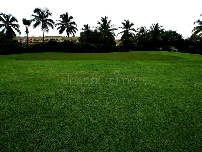 Golf course with green.Tree in golf course. Tree in golf course on sunset time.Artificial green grass texture or green grass background for golf course. soccer royalty free stock photography