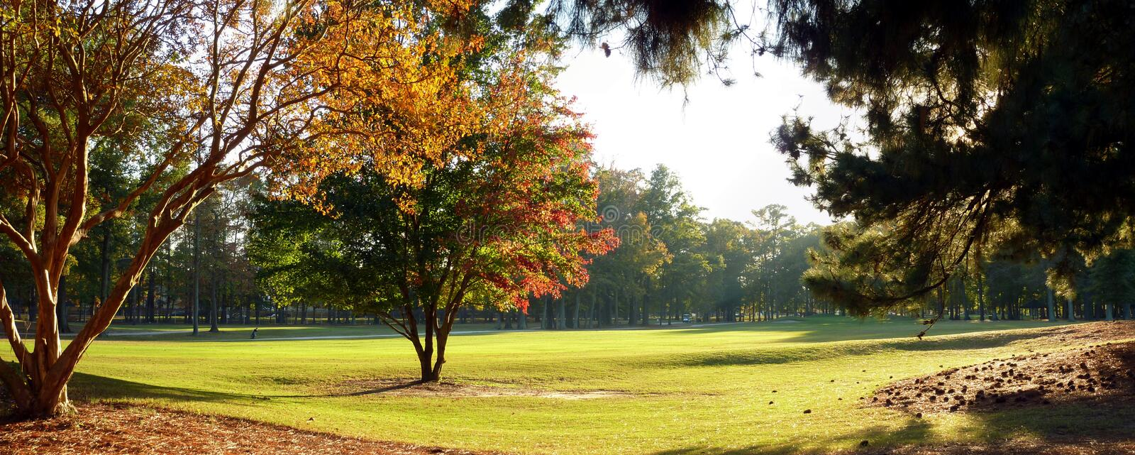 Golf course late evening royalty free stock image