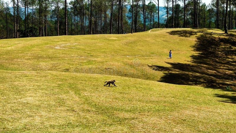 Golf Course in Ranikhet, Uttarakhand stock photo