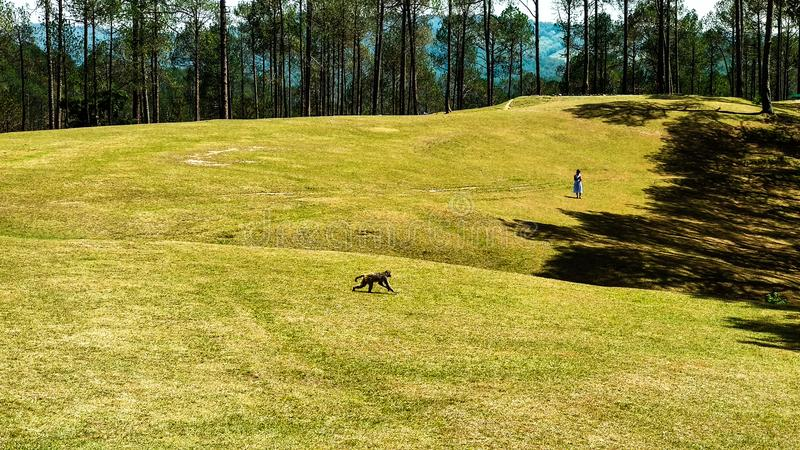 Golf Course in Ranikhet Uttarakhand royalty free stock images