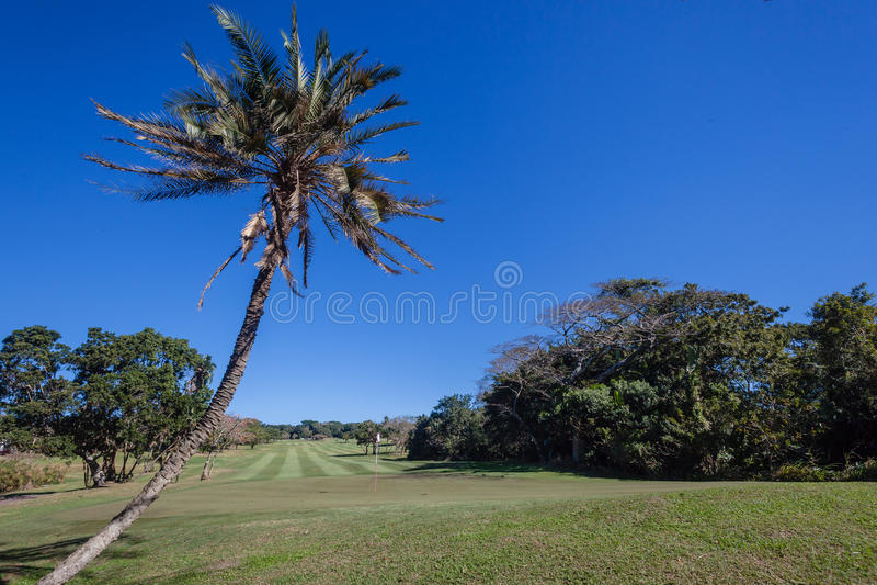 Golf Course Selborne Editorial Photo