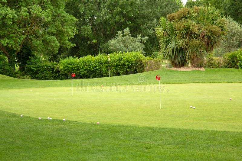 Golf course with trees, balls and pegs stock photo