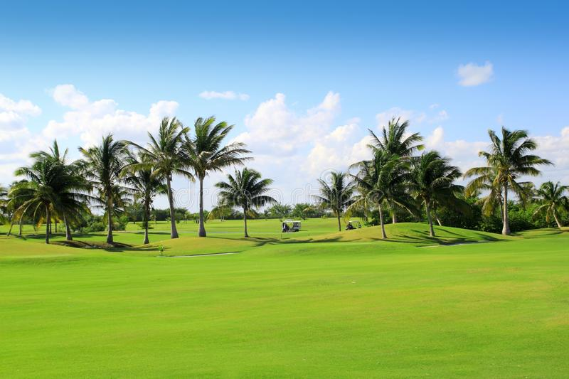 Golf course tropical palm trees Mexico royalty free stock photography