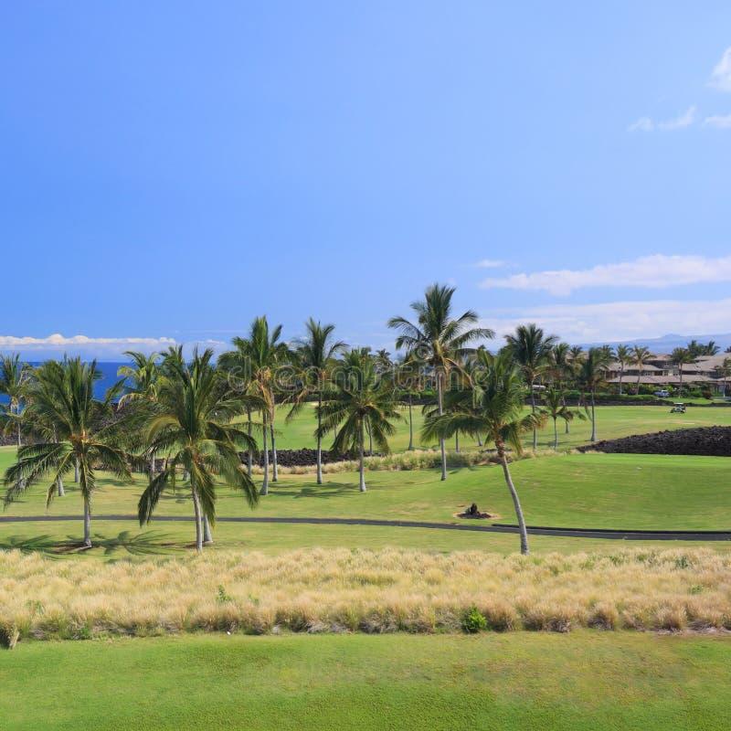 Golf d'Hawaï dans la plantation côtière de paume photos stock