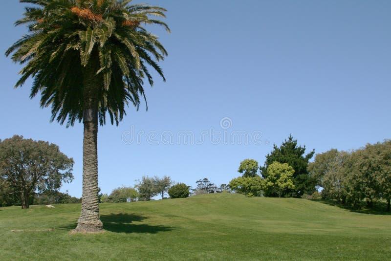 Download Golf Fairway Royalty Free Stock Photo - Image: 1561445