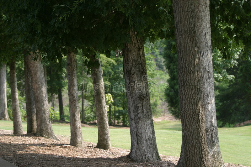 Download Golf Fairway Tree Lined stock photo. Image of game, birdie - 1036640
