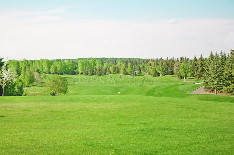 Download Golf field stock image. Image of tree, landscape, play - 21543635