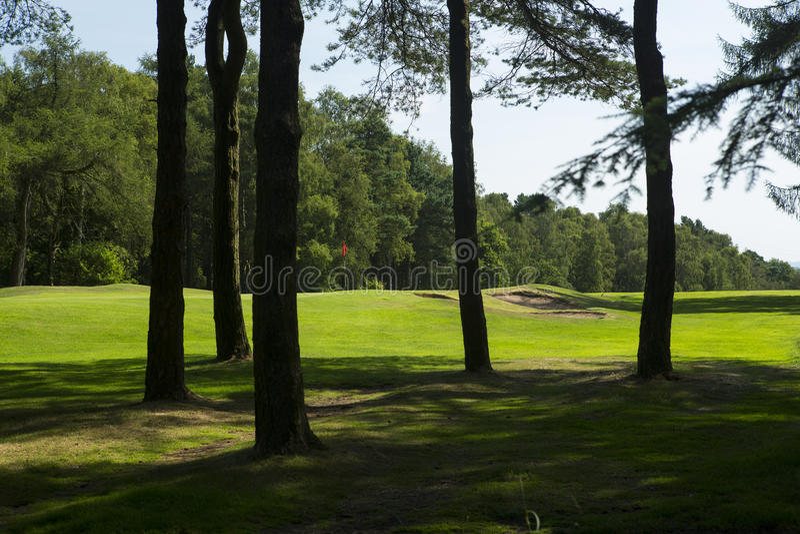 Golf flag through trees stock photo