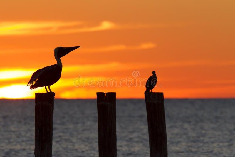 Golf Meksyk z dramatycznym zmierzchem z kormoranem i pelikanem umieszczał przed nim widzieć od Myers plaży Dla jak, Florid obraz stock