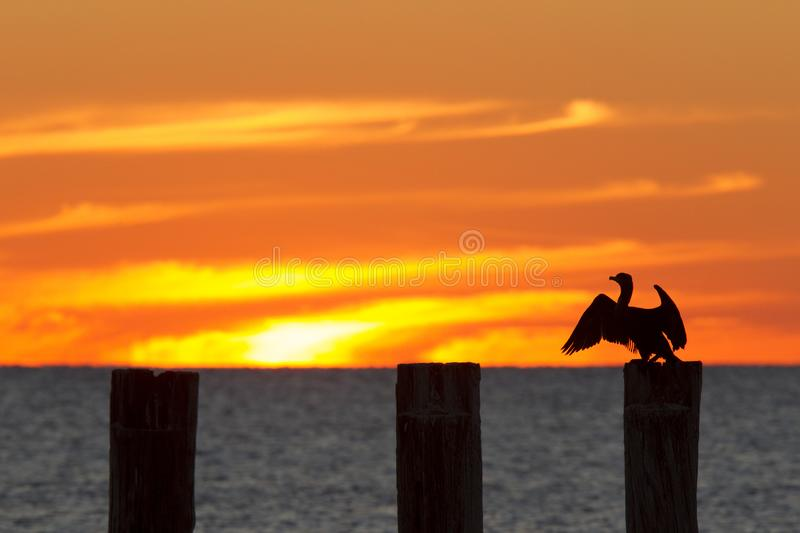 The golf of Mexico with a dramatic sunset with a cormorant perched in the foreground as seen from For Myers Beach, Florida, USA.  royalty free stock image