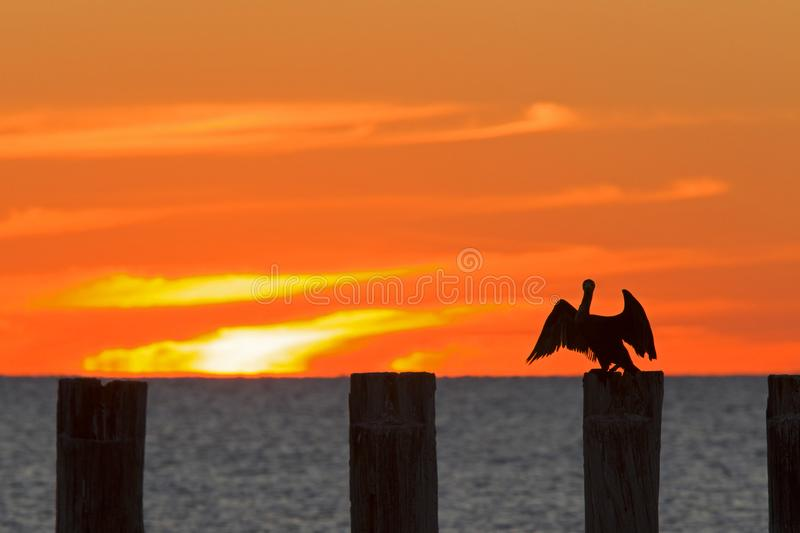 The golf of Mexico with a dramatic sunset with a cormorant perched in the foreground as seen from For Myers Beach, Florida, USA.  stock photography