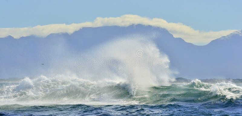 Golf Oceaangolf die oceaanwaterkracht verpletteren Het krachtige oceaangolven breken Golf op de oppervlakte van de oceaan Golfond royalty-vrije stock foto