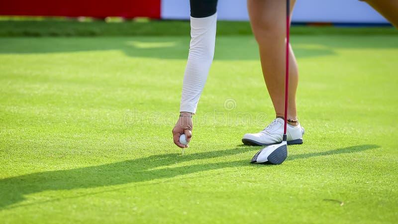 Golfare som sätter golfboll på grönt gräs för kontrollfarled för att spela golfboll i hål arkivbilder