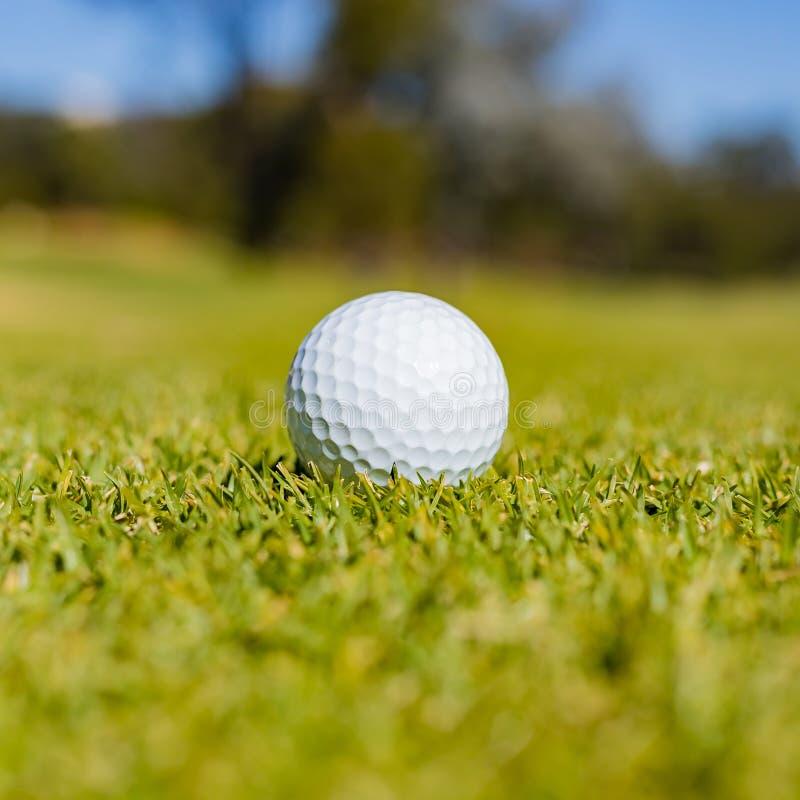 Golfbal op Fairway groen bij een golfcursus stock afbeelding