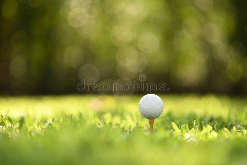 Golfbal op groen gras met de achtergrond van de golfcursus royalty-vrije stock foto
