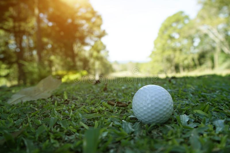 golfbal op groen gras in mooie golfcursus met zonsondergang Golfbal dichte omhooggaand in golfcoures royalty-vrije stock afbeelding