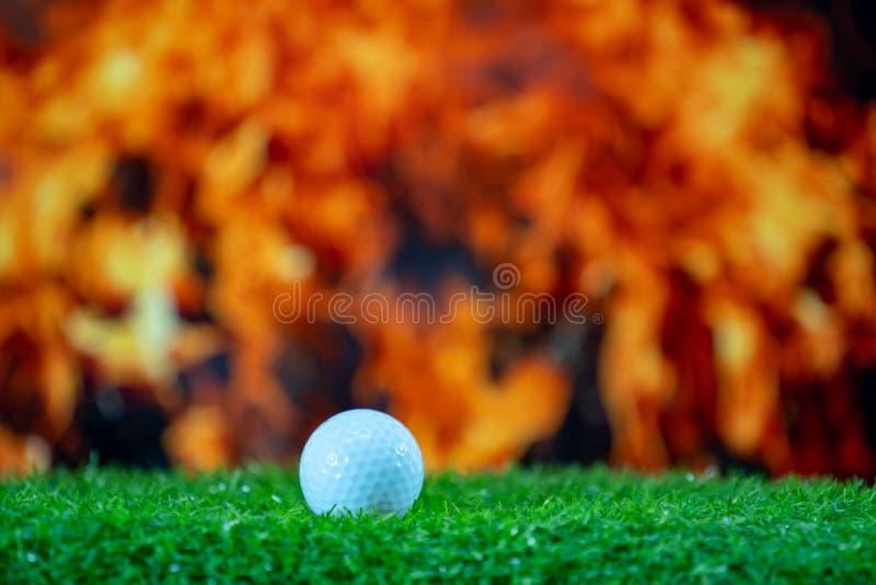 Golfbal op groene grascursus royalty-vrije stock fotografie