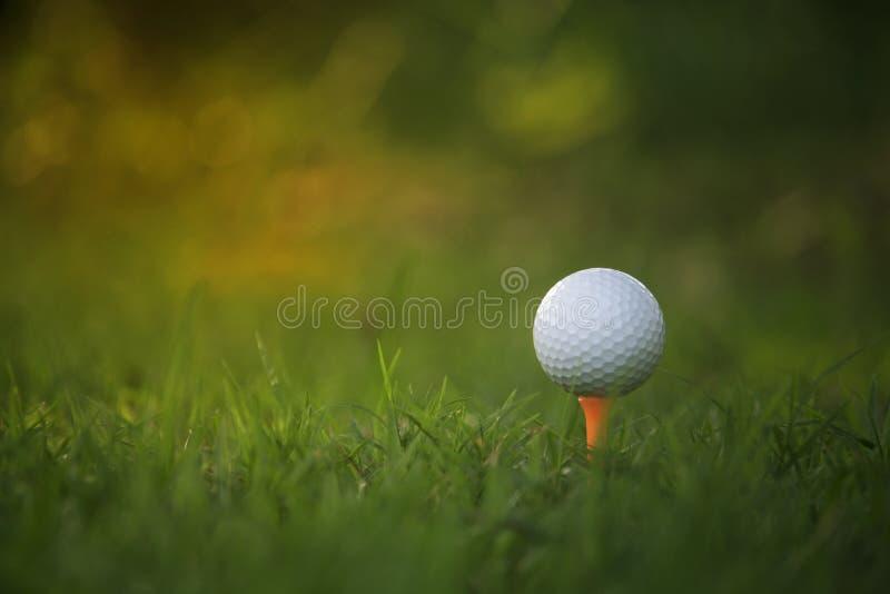 Golfbal op T-stuk in een mooie golfcursus met ochtendzonneschijn stock afbeelding