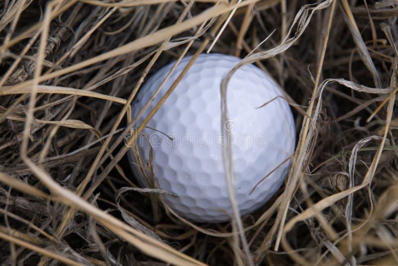 Golfbal in ruw stock afbeelding