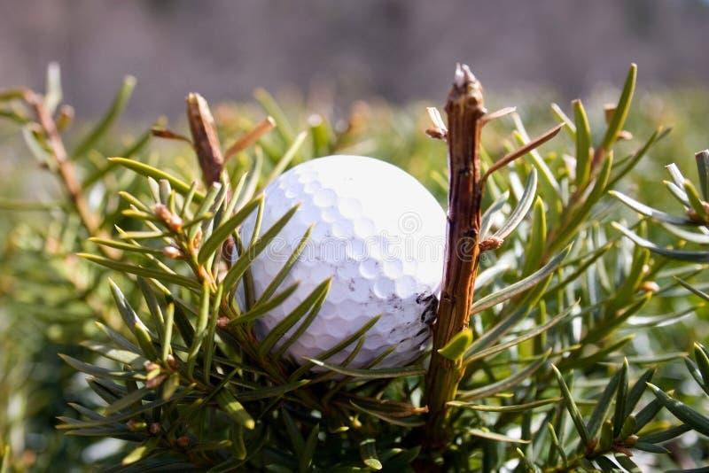 golfball τοποθετημένος σε λάθ&omicron στοκ εικόνες