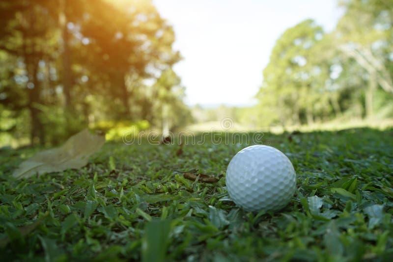 Golfball auf grünem Gras im schönen Golfplatz mit Sonnenuntergang Golfballabschluß oben in Golf coures lizenzfreies stockbild