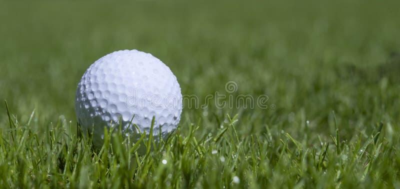 Golfball i gräs royaltyfri foto