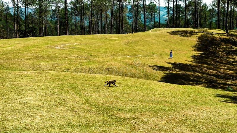 Golfbana i Ranikhet Uttarakhand royaltyfria bilder