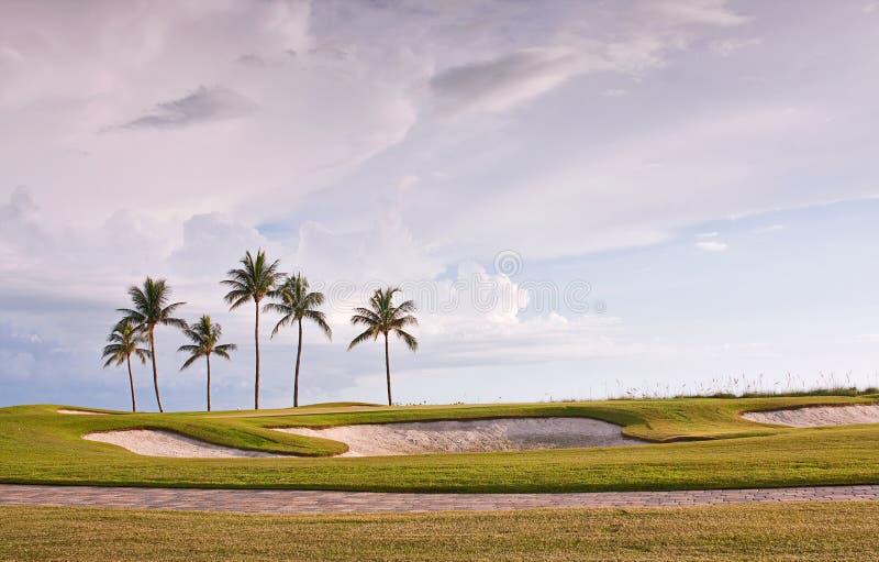 Golfbanasolnedgång med tropiska palmträd royaltyfri fotografi