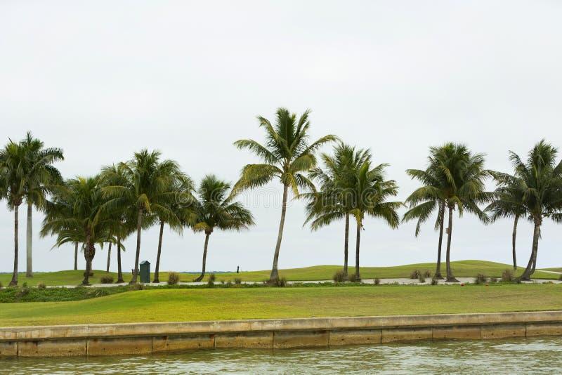 Golfbanasoluppgång och landskap gräs Udde Coral Florida, U royaltyfria foton