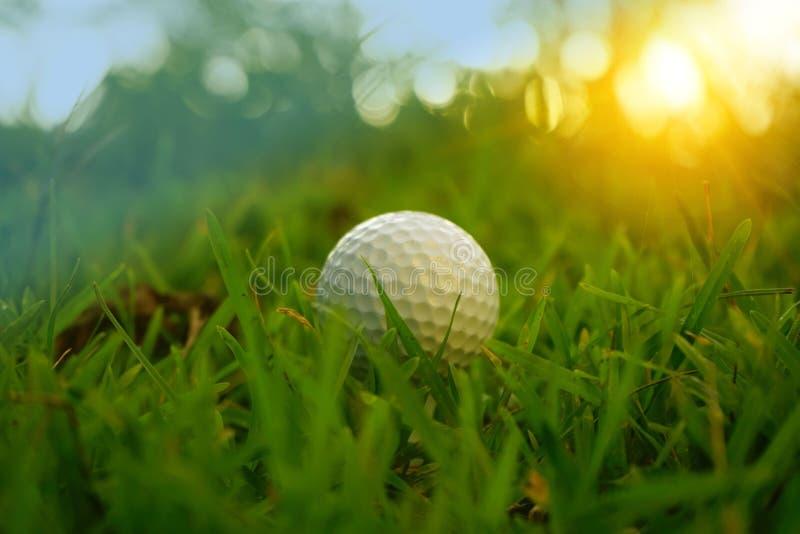 golfboll är i buse i härlig golfbana på solnedgångbakgrund arkivbilder