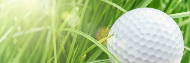 Golfboll över bakgrund för grönt gräs, closeup Sport och leisur royaltyfria bilder