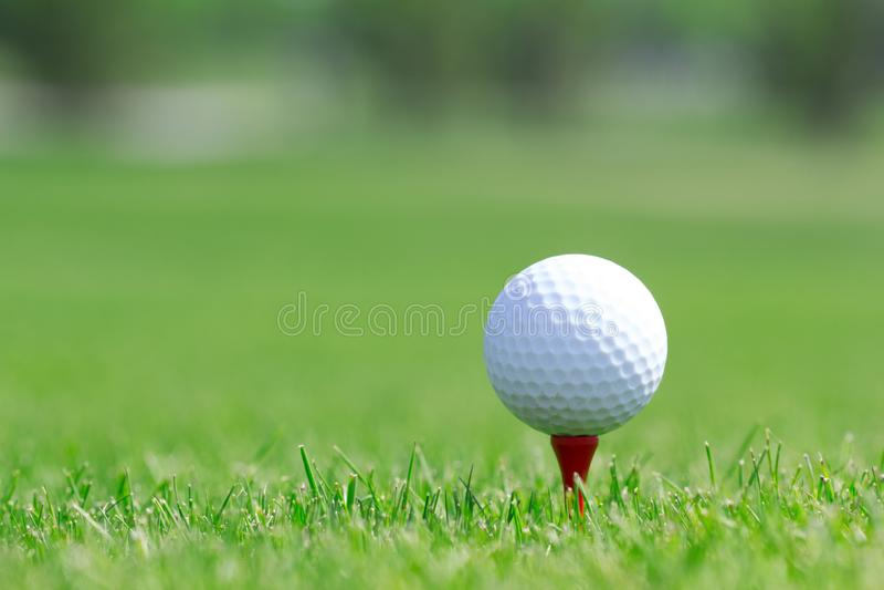 Golfboll i gräs på fältet royaltyfri bild