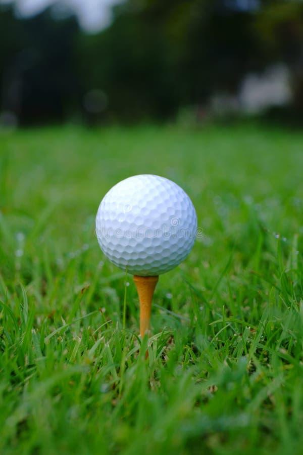Golfboll och utslagsplats med guld- kursbakgrund som är klar till utslagsplatsen av royaltyfri fotografi