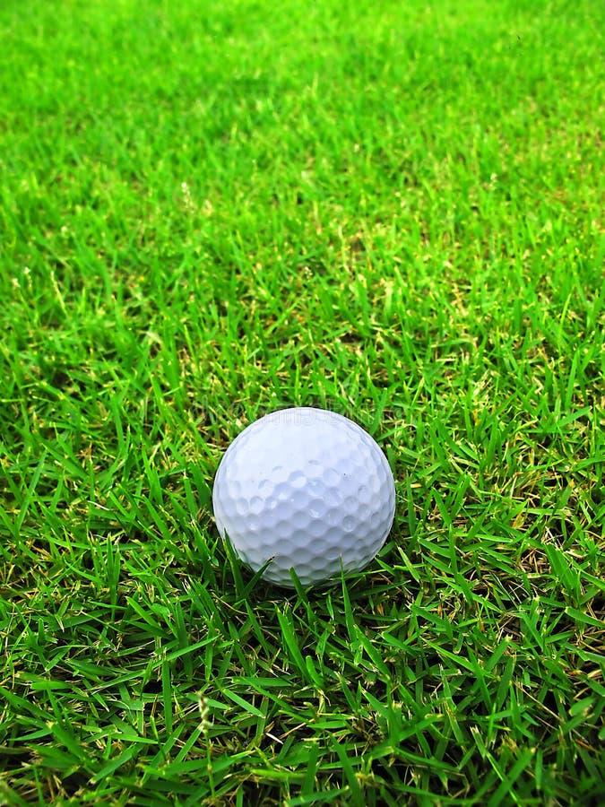 Golfboll på gräset arkivfoto