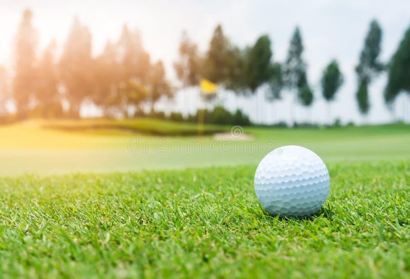 Golfboll på golfbana royaltyfri foto