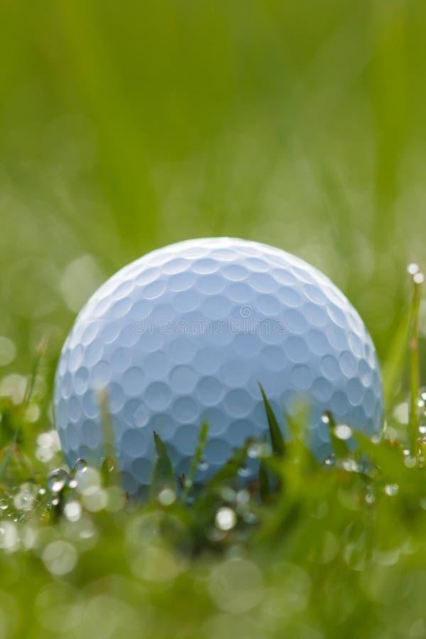 Golfboll på gräs med vattendroppar royaltyfria foton