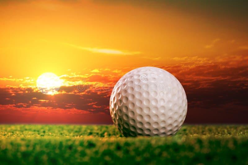 Golfboll på gräsmattan arkivbild