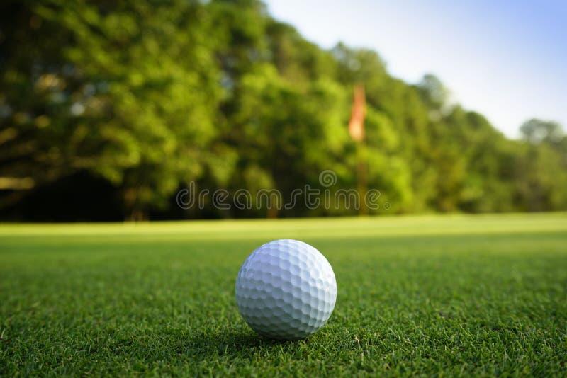 Golfboll på gräsplan i härlig golfbana på solnedgångbakgrund arkivfoto