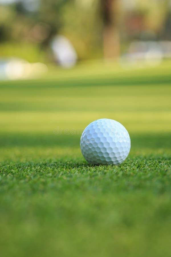 Golfboll på grönt gräs i kurs royaltyfri fotografi